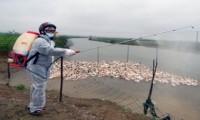Huy động toàn dân tham gia phòng chống cúm A/H7N9